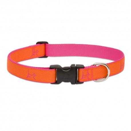 """Collar 1"""" Sunset Orange - Envío Gratis"""