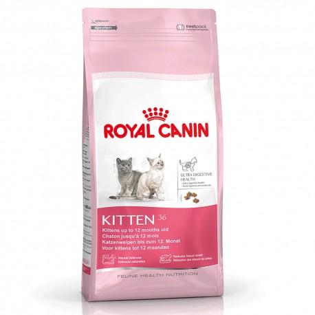 Kitten - Envío Gratis