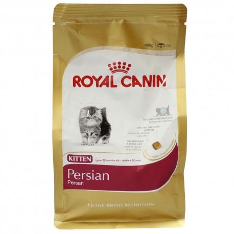 Persian Kitten - Envío Gratis