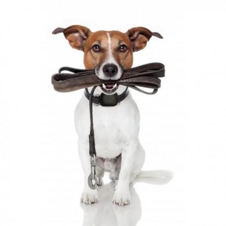 Watch-U Pets Localizador GPS - Envío Gratis