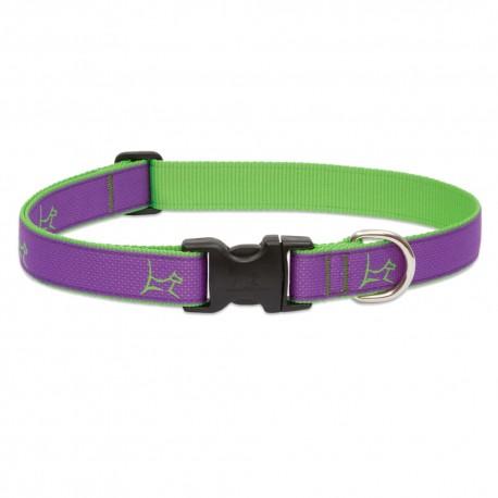 "Collar 1"" Hampton Purple - Envío Gratis"