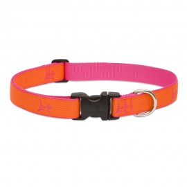 "Collar 1"" Sunset Orange"