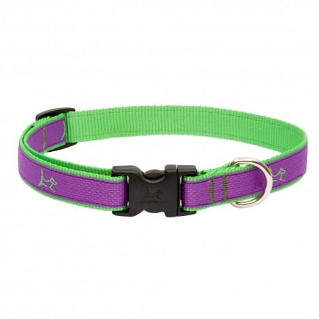 "Collar 3/4"" Hampton Purple - Envío Gratis"