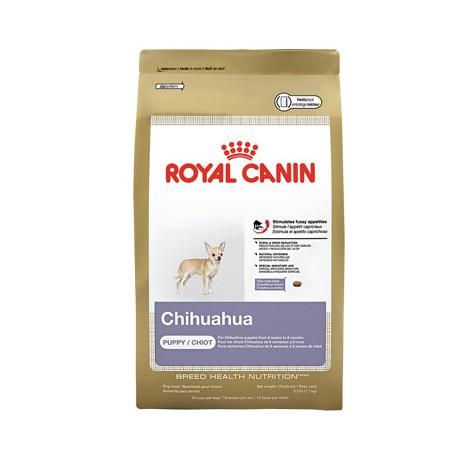 Chihuahua Puppy - Envío Gratis