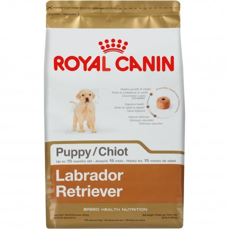 Labrador Retriever Puppy - Envío Gratis