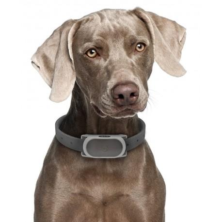 Collar Anti Ladrido Bark 100 - Envío Gratis